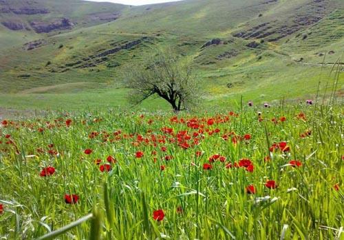 طبیعت زیبای شهرستان گرمی-اردبیل؛زیبایی و دیگر هیچ...